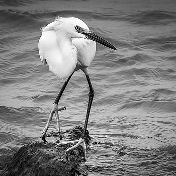 Snowy Egret 2 by Mark Peavy