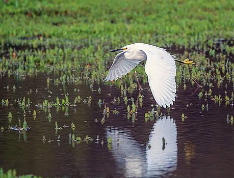 Snowy Egret 7958-021918-1c by Tam Ryan