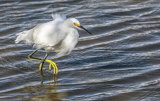 Snowy Egret 8109-021918-1cr by Tam Ryan