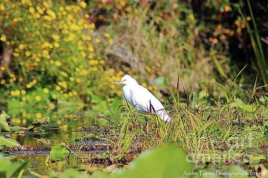 Snowy Egret by Andre Turner