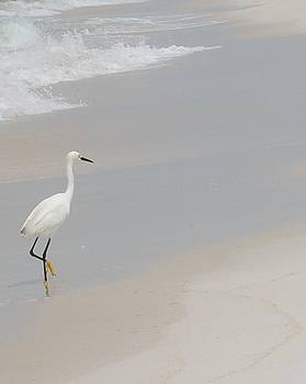 Snowy Egret by Beverly Hammond