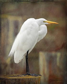 Great Egret - 8603,ST by Wally Hampton