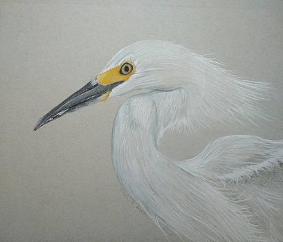 Snowy Egret by Joan Mansson