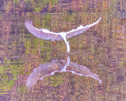 Snowy Egret Pastel Reflections by Deb Henman