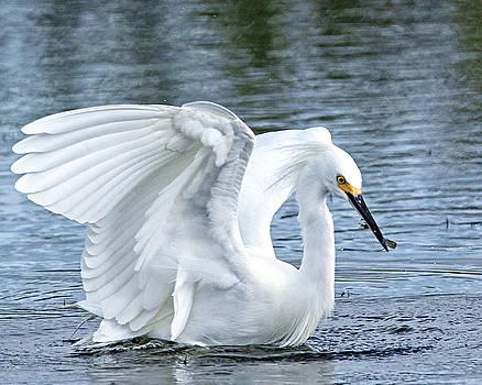 Snowy Egret by Terri Tiffany