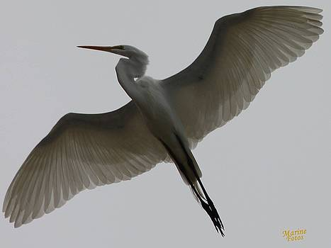 Gary Canant - Snowy Egret Wings of an Angel
