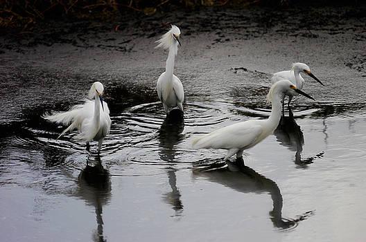 Snowy Egrets I by Jane Melgaard