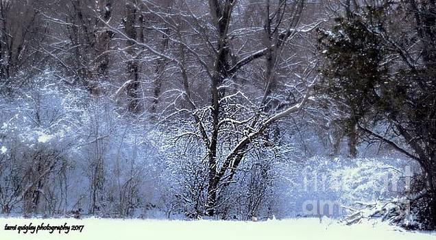 Tami Quigley - Snowy Eveningtide