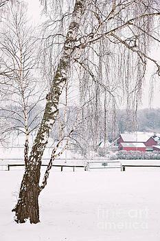 Snowy farm landscape by Sophie McAulay