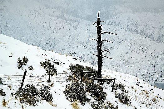 Roland Stanke - snowy fences