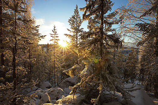 Snowy fir trees are illuminated by the low winter sun by Ulrich Kunst And Bettina Scheidulin