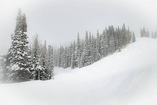 Snowy Firs by Sean Allen