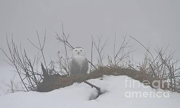 Snowy Fog by Teresa McGill