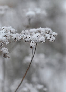 Snowy Garden Plants by Sarah Beth Smith