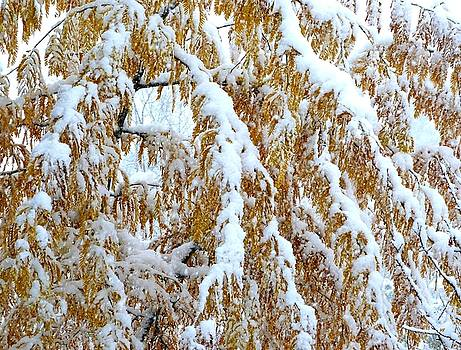 Snowy Golden Locust by Will Borden