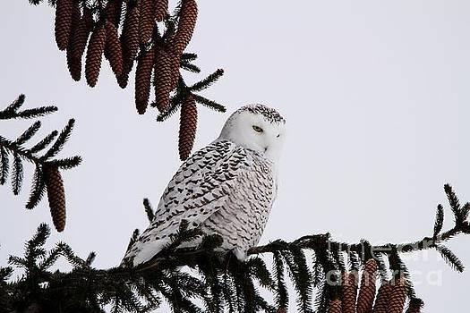 Snowy Hunt by Teresa McGill