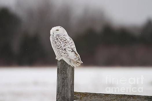 Snowy Indifference by Teresa McGill