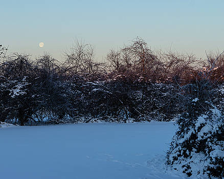 Snowy Moonset by Steve Atkinson