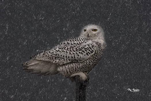Snowy Night by Peg Runyan