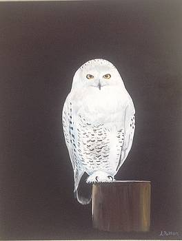 Snowy Owl at night by Andrea Patton
