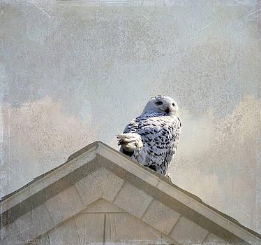 Snowy Owl  by Betty Pauwels