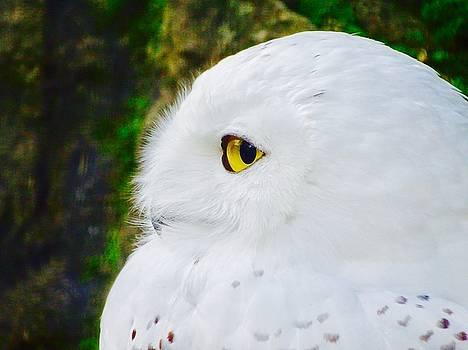 Snowy Owl by Ed Berlyn