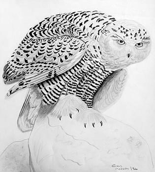 Snowy Owl by Ellen Nelson