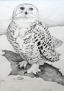 Snowy Owl by Jill Iversen