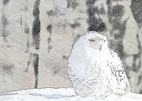 Snowy Owl by Linda Joyce
