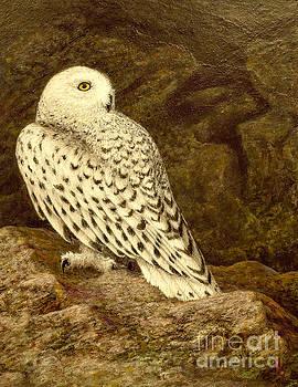 Snowy Owl by Marc Dmytryshyn