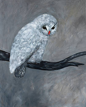 Snowy Owl by Megan Morris Collection