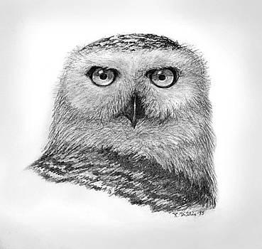 Snowy Owl by Rich DiSilvio