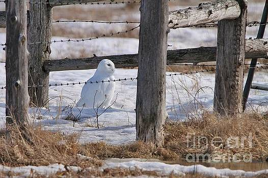 Snowy Pasture by Teresa McGill