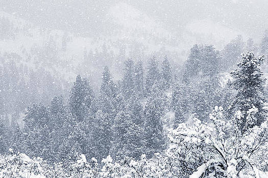 Steve Krull - Snowy Ridge in the Pike National Forest