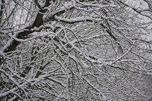 Annie Babineau - snowy scene