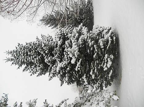 Snowy Tree by Emma Sechrest