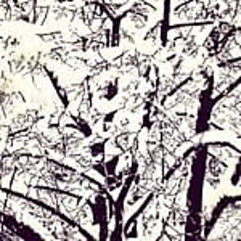 Snowy Tree by Kathleen McGinley