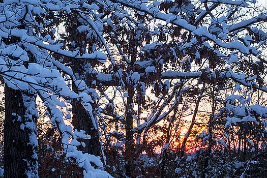 Toby McGuire - Snowy tree sunset