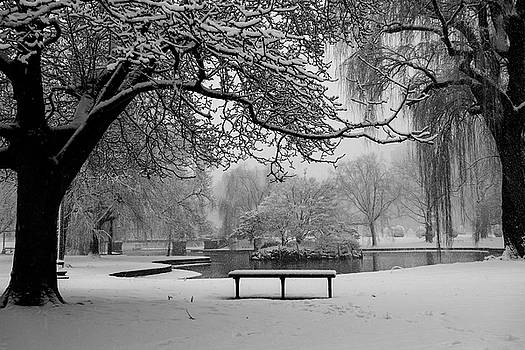 Toby McGuire - Snowy Tree The Public Garden Boston MA Bench Black and White