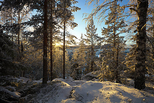 Snowy trees are illuminated by the low winter sun by Ulrich Kunst And Bettina Scheidulin