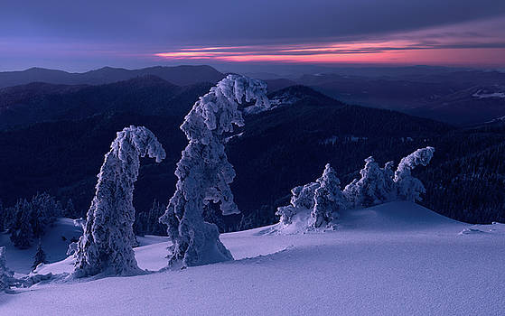 Snowy trees in twilight. Carpathians, Ukraine by Sergey Ryzhkov