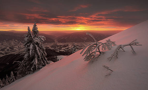 Snowy trees on background of amazing sunset in winter Carpathian by Sergey Ryzhkov