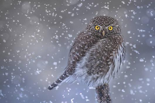 Night Owl by Joy McAdams