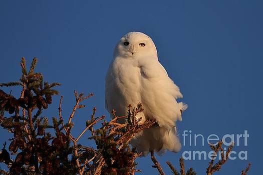 Snowy White Sunset by Teresa McGill