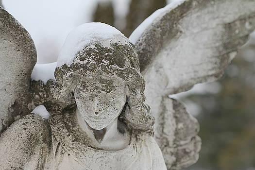 Cynthia Conte - Snowy Wings