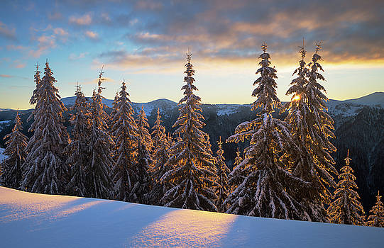 Snowy winter spruce forest in morning light by Sergey Ryzhkov