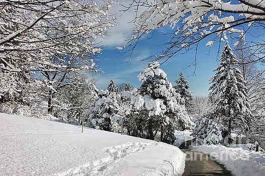 Snowy Wonderland  by Elaine Manley