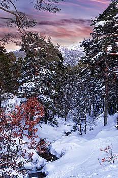 Hernan Bua - Snowy wood