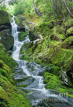 Snyder Brook - Low and Burbank's Grant New Hampshire  by Erin Paul Donovan