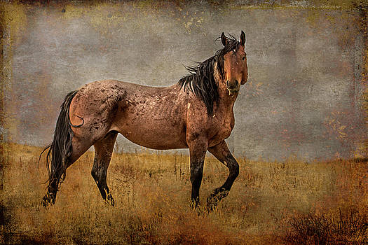 So Handsome by Mary Hone